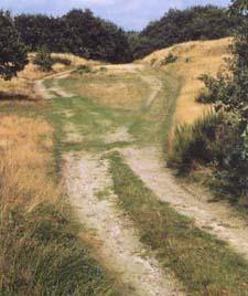 Einer der wenigen Reste des Ochsenwegs bei Lürschau , einige Kilometer nördlich von Schleswig