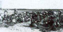 Baumschularbeit war Handarbeit für viele Menschen. Das Bild entstand um 1914 und zeigt Frauen beim Sortieren und Bündeln von Jungpflanzen