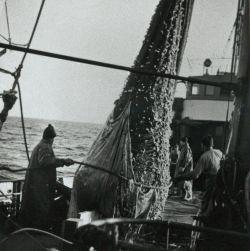 """Ein """"Hief"""" kommt an Deck. Bild von der Arbeit auf See auf einem Glückstädter Dampflogger"""