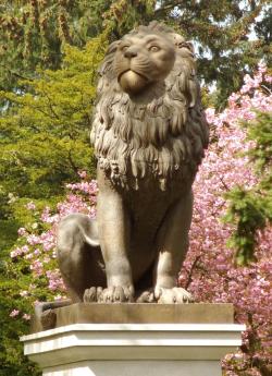 Der Löwe heute wieder in Flensburg