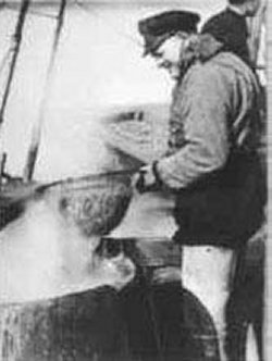 Der Husumer Fischer Kurt Laß beim Keschern der gekochten Krabben. Im Hintergrund ist das Kühlsieb sichtbar