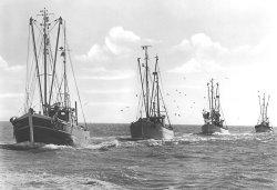 Krabbenkutter im Wattenmeer: obwohl inzwischen mit Motor betrieben haben die Rümpfe noch die typische Kutterform