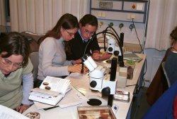 Grundfertigkeiten: Praktikanten lernen im IFM den Umgang mit dem Mikroskop
