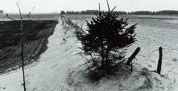 Sandverwehungen auf der Geest in den Zeiten, als die neu angepflanzten Hecken noch keinen Schutz boten