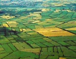 Das Ergebnis: Knicks umschließen ausreichend große Wiesen und Felder, die durch Wirtschaftswege gut zu erreichen sind